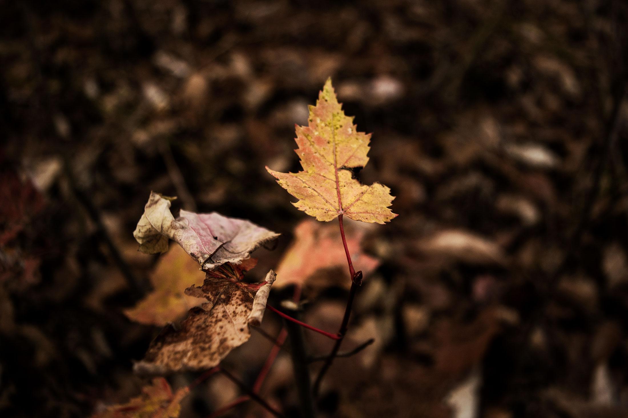 Nature Photography Kentucky