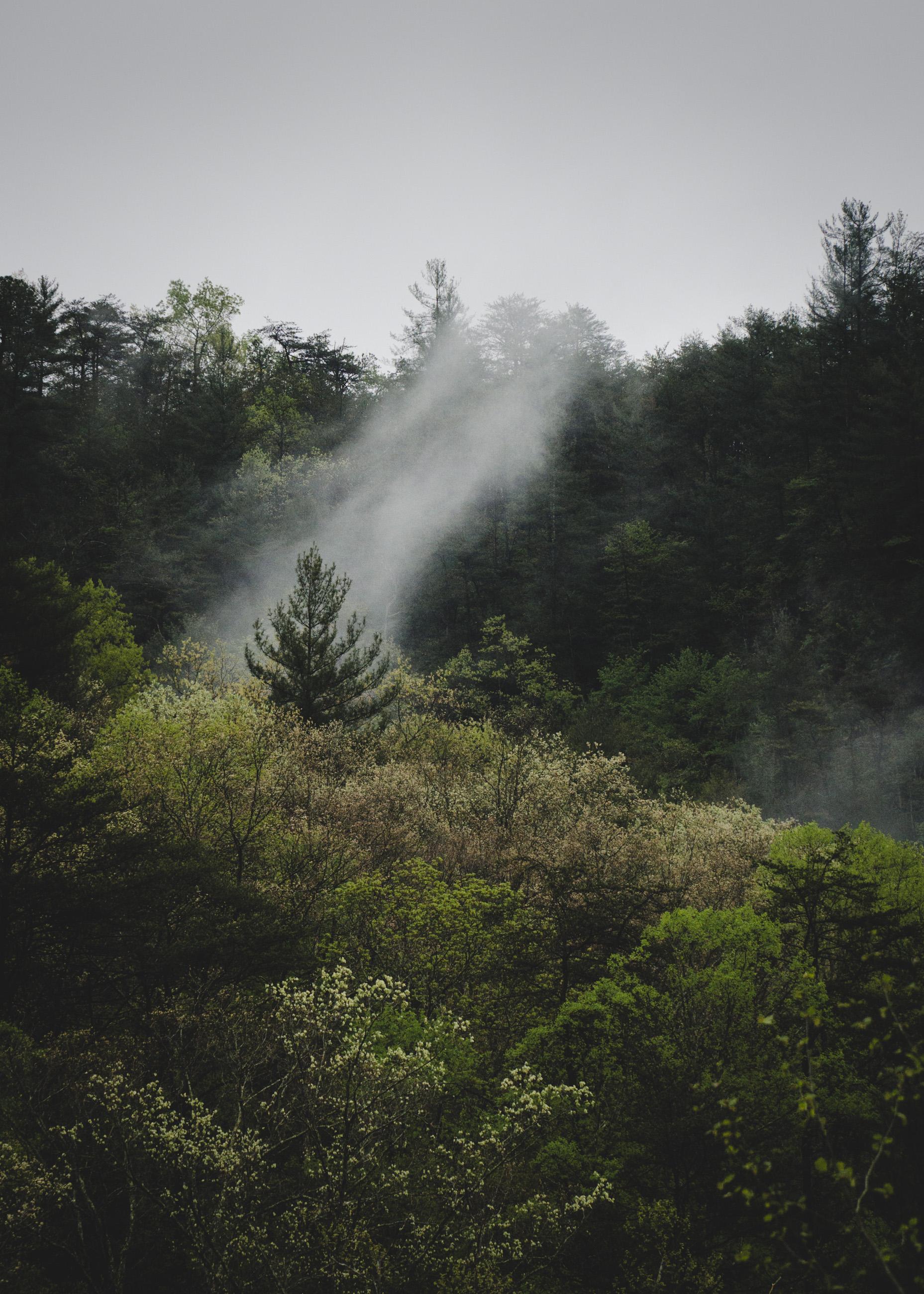 foggy-day-redux_3