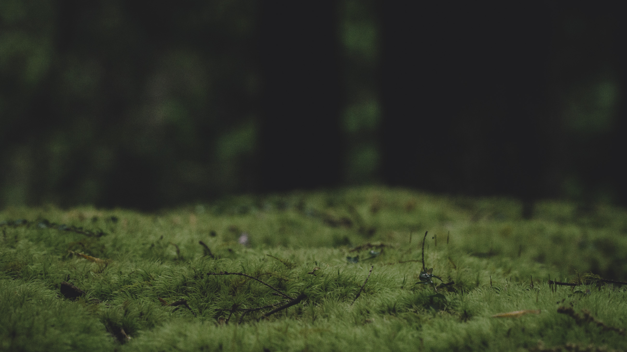 forest-vibes-series_11
